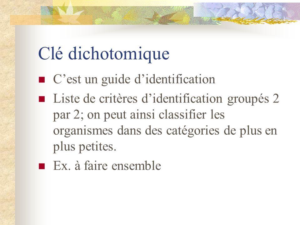 Clé dichotomique Cest un guide didentification Liste de critères didentification groupés 2 par 2; on peut ainsi classifier les organismes dans des cat