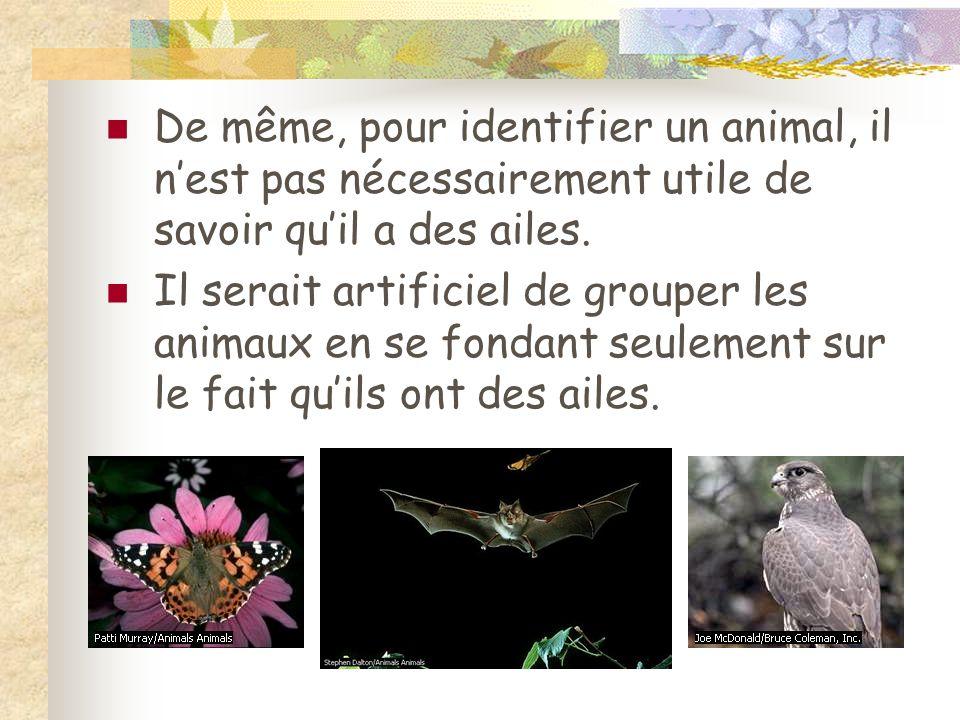 De même, pour identifier un animal, il nest pas nécessairement utile de savoir quil a des ailes. Il serait artificiel de grouper les animaux en se fon