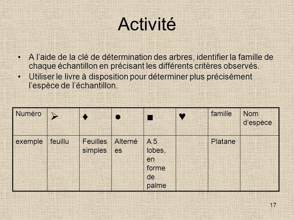 17 Activité A laide de la clé de détermination des arbres, identifier la famille de chaque échantillon en précisant les différents critères observés.