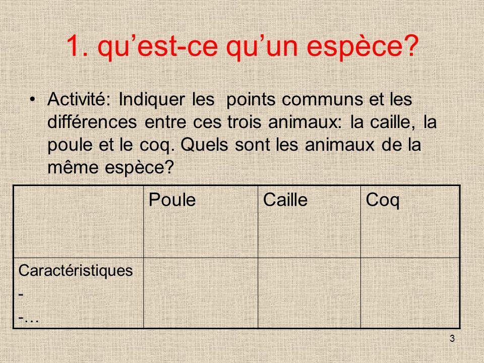 3 1. quest-ce quun espèce? Activité: Indiquer les points communs et les différences entre ces trois animaux: la caille, la poule et le coq. Quels sont