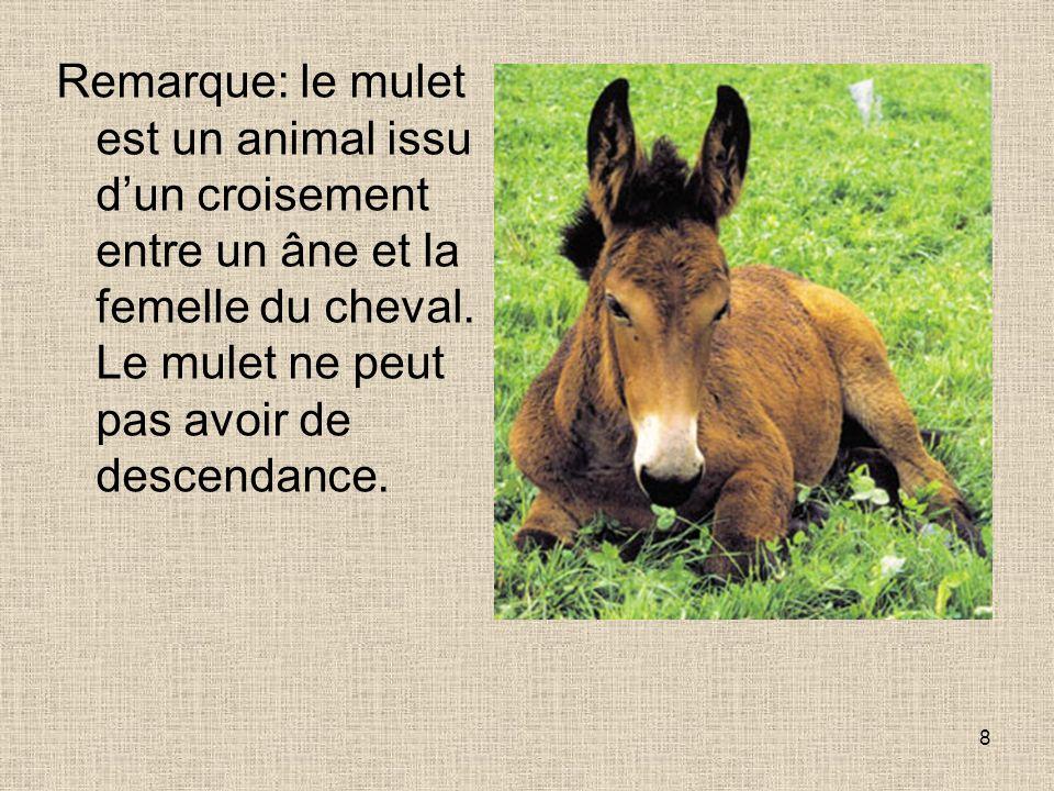 8 Remarque: le mulet est un animal issu dun croisement entre un âne et la femelle du cheval. Le mulet ne peut pas avoir de descendance.