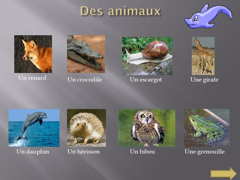 Un renard Un crocodileUn escargotUne girafe Un dauphinUn hérissonUn hibouUne grenouille