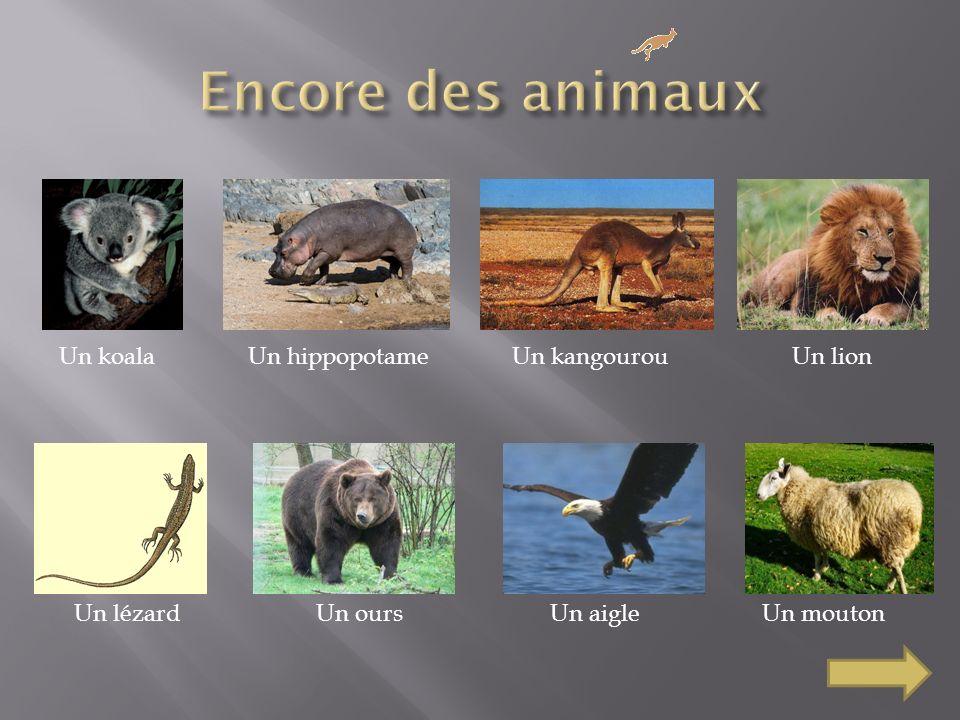 Un koalaUn hippopotameUn kangourouUn lion Un lézardUn oursUn aigleUn mouton