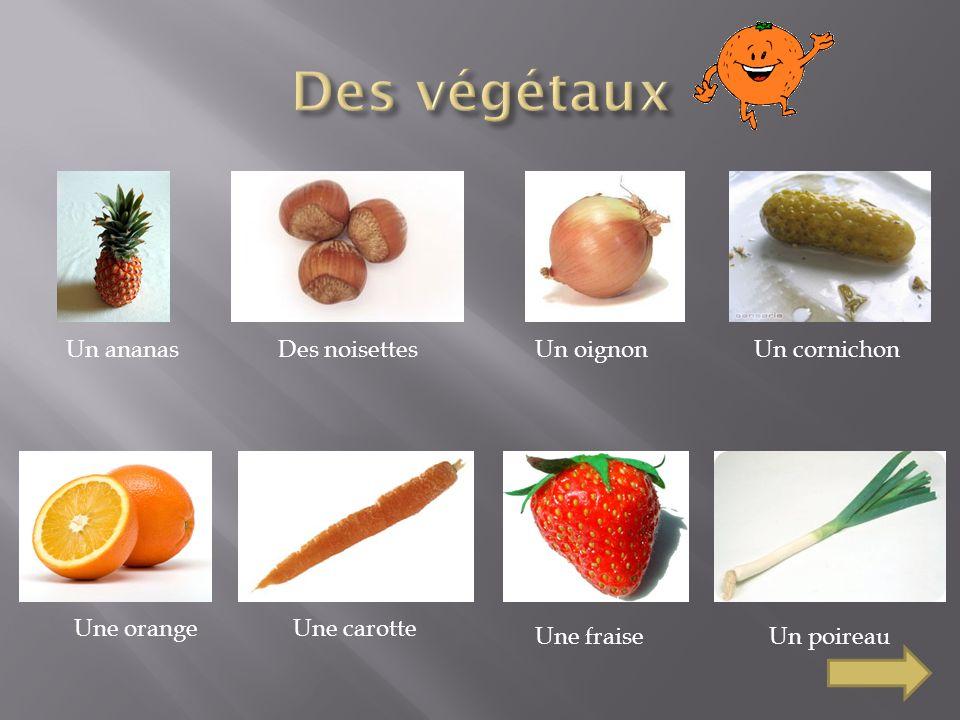 Un ananasDes noisettesUn oignonUn cornichon Une orangeUne carotte Une fraiseUn poireau