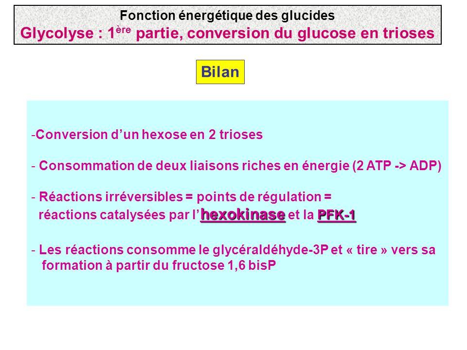 Bilan -Conversion dun hexose en 2 trioses - Consommation de deux liaisons riches en énergie (2 ATP -> ADP) hexokinase PFK-1 - Réactions irréversibles