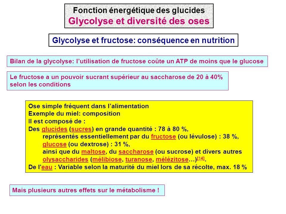 Ose simple fréquent dans lalimentation Exemple du miel: composition Il est composé de : Des glucides (sucres) en grande quantité : 78 à 80 %,glucidess