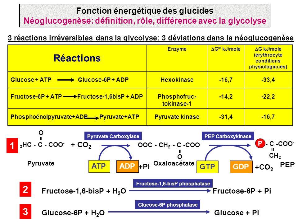 3 réactions irréversibles dans la glycolyse: 3 déviations dans la néoglucogenèse -16,7-31,4Pyruvate kinasePhosphoénolpyruvate+ADP Pyruvate+ATP -22,2-1