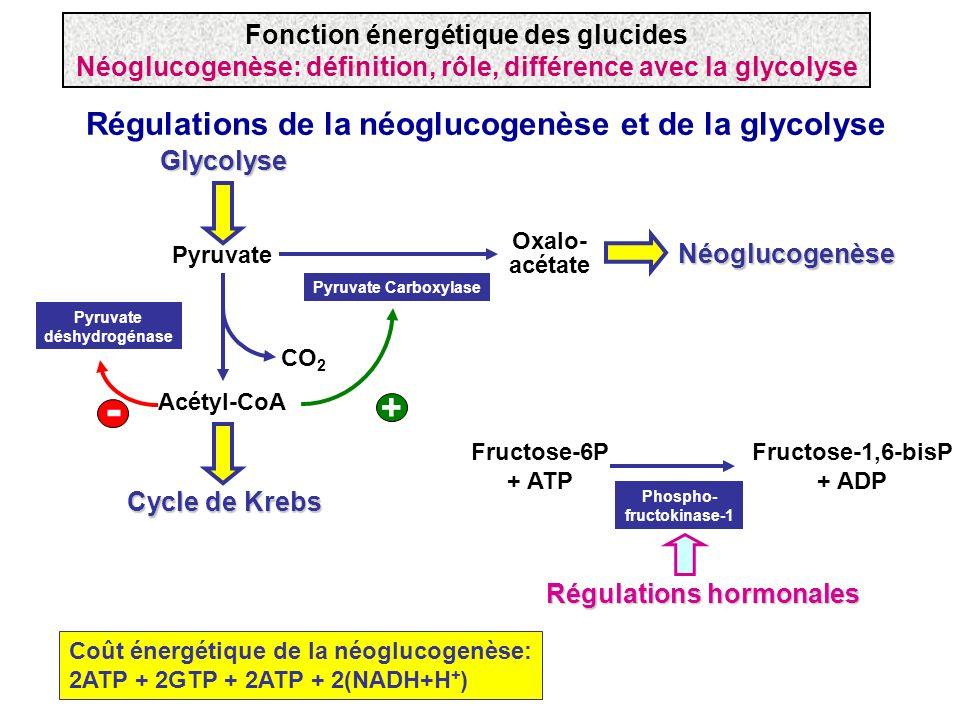 Régulations de la néoglucogenèse et de la glycolyse Acétyl-CoA Cycle de Krebs Pyruvate Glycolyse Oxalo- acétate Pyruvate Carboxylase Pyruvate déshydro