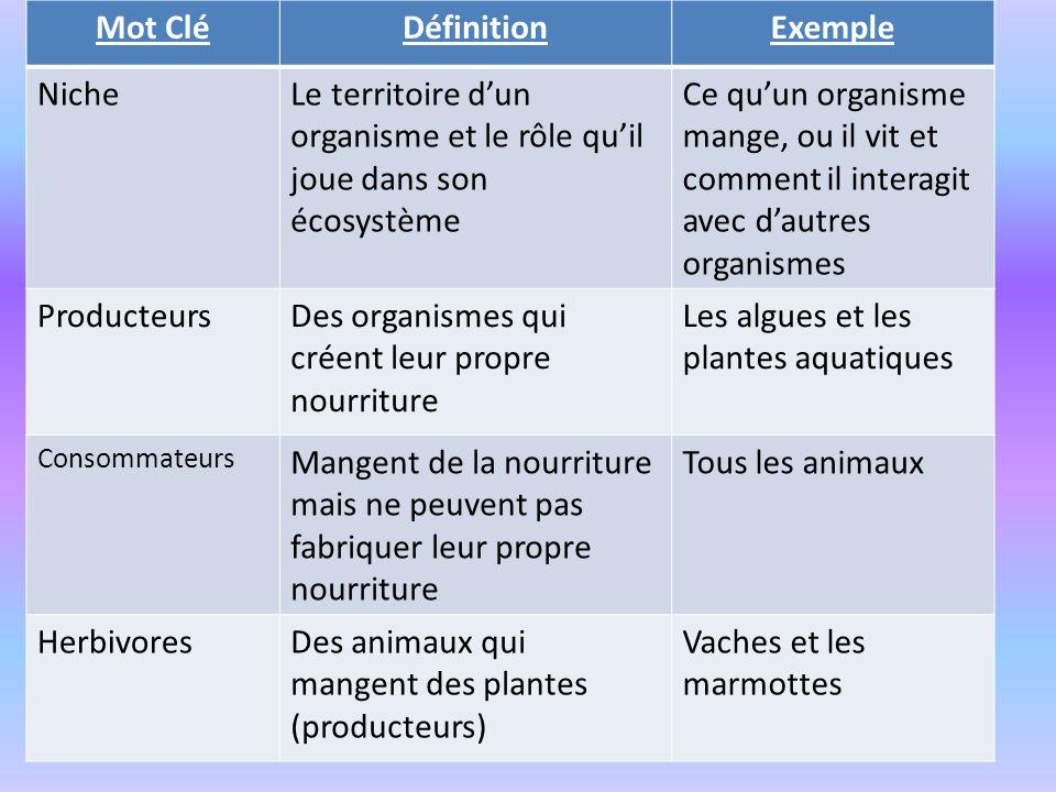 Mot CléDéfinitionExemple NicheLe territoire dun organisme et le rôle quil joue dans son écosystème Ce quun organisme mange, ou il vit et comment il in