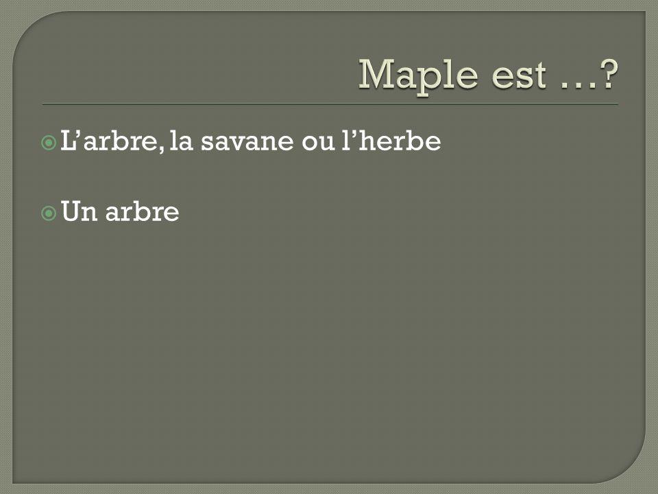 Larbre, la savane ou lherbe Un arbre