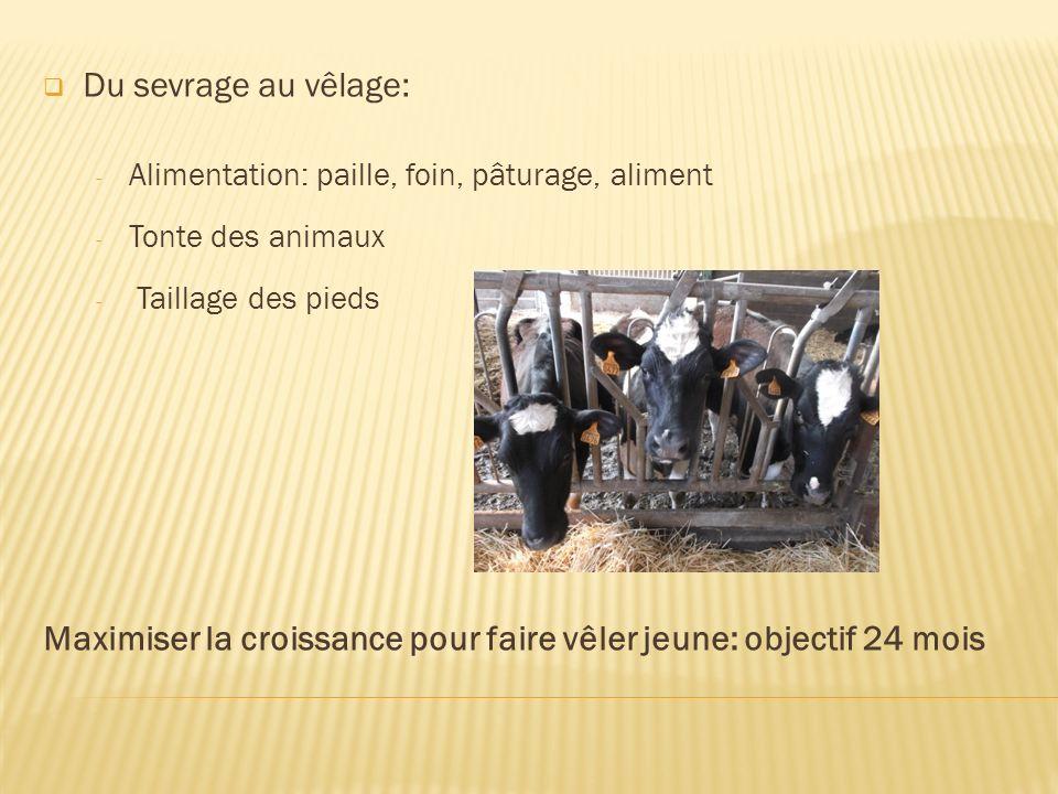 Du sevrage au vêlage: - Alimentation: paille, foin, pâturage, aliment - Tonte des animaux - Taillage des pieds Maximiser la croissance pour faire vêle
