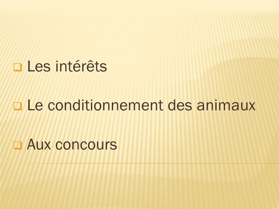 Les intérêts Le conditionnement des animaux Aux concours