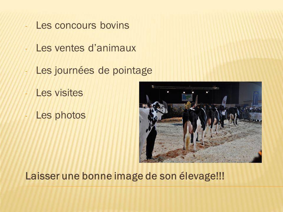 - Les concours bovins - Les ventes danimaux - Les journées de pointage - Les visites - Les photos Laisser une bonne image de son élevage!!!