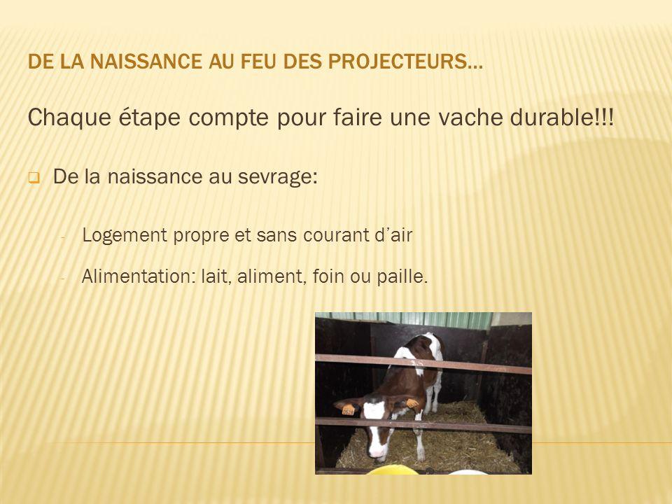 DE LA NAISSANCE AU FEU DES PROJECTEURS… Chaque étape compte pour faire une vache durable!!! De la naissance au sevrage: - Logement propre et sans cour