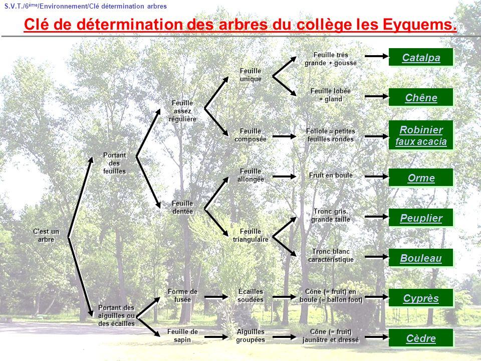 S.V.T./6 ème /Environnement/Clé détermination arbres Clé de détermination des arbres du collège les Eyquems.