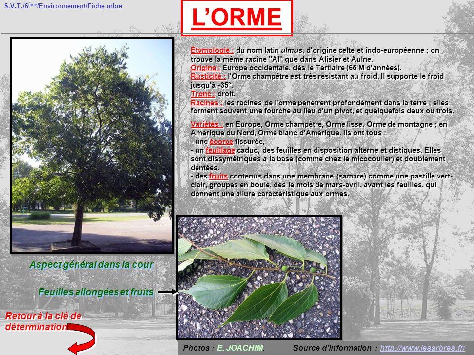 S.V.T./6 ème /Environnement/Fiche arbre LORME Aspect général dans la cour Feuilles allongées et fruits Retour à la clé de détermination Étymologie : d