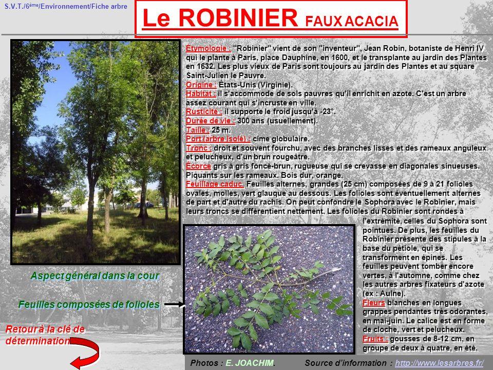 S.V.T./6 ème /Environnement/Fiche arbre Le ROBINIER FAUX ACACIA Aspect général dans la cour Feuilles composées de folioles Retour à la clé de détermination Photos : E.