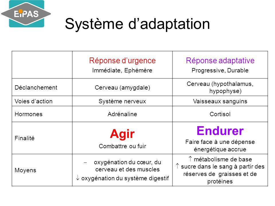 Système dadaptation Réponse durgence Immédiate, Ephémère Réponse adaptative Progressive, Durable DéclanchementCerveau (amygdale) Cerveau (hypothalamus