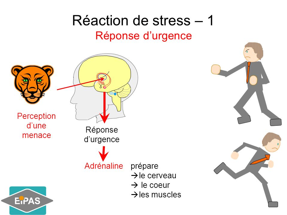 Réaction de stress – 1 Réponse durgence vigilance fréquence cardiaque Pression artérielle Oxygénation des muscles Oxygénation dans le système digestif Le corps est prêt à un effort physique Agir