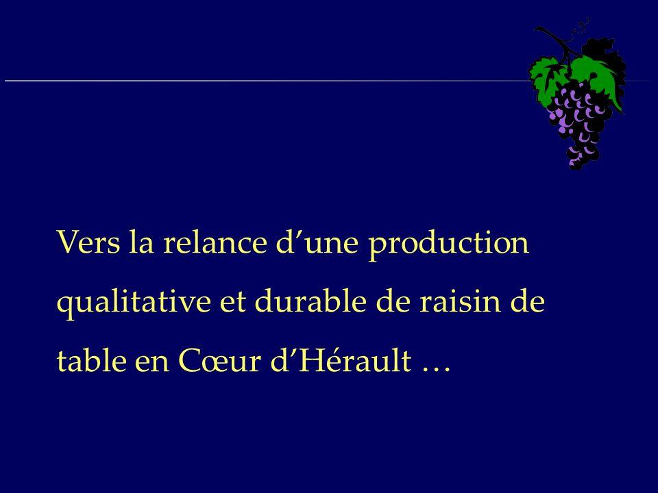 Vers la relance dune production qualitative et durable de raisin de table en Cœur dHérault …