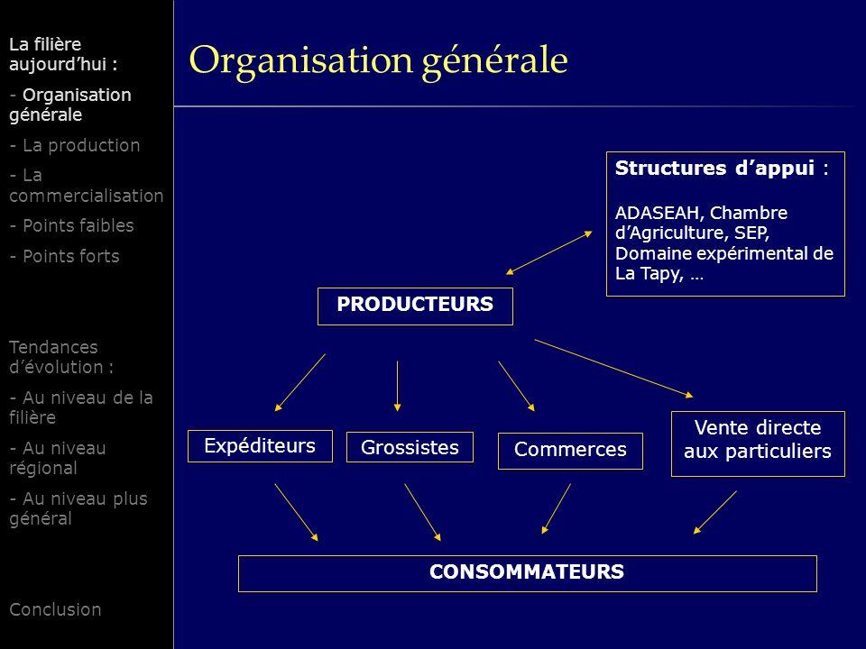 Organisation générale La filière aujourdhui : - Organisation générale - La production - La commercialisation - Points faibles - Points forts Tendances