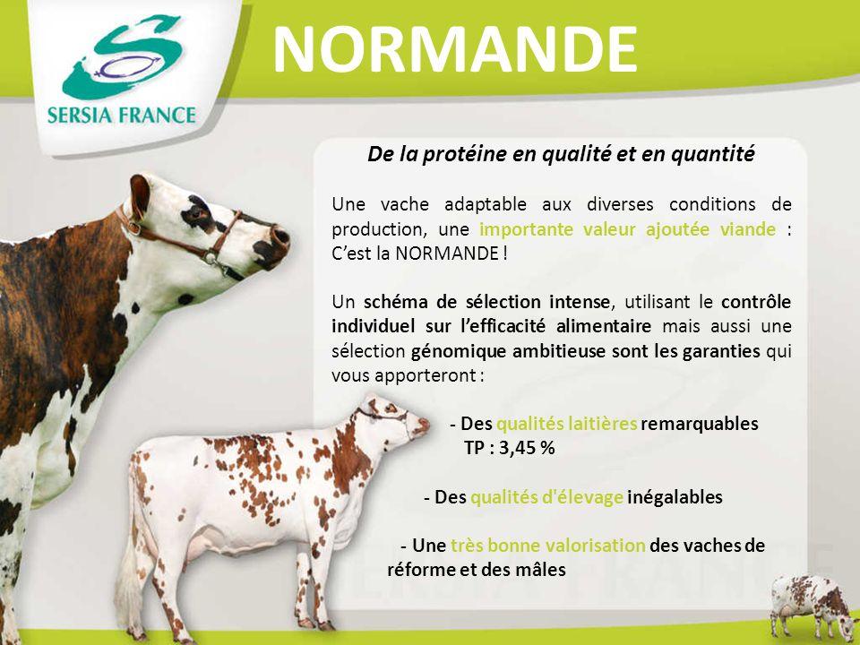 NORMANDE De la protéine en qualité et en quantité Une vache adaptable aux diverses conditions de production, une importante valeur ajoutée viande : Ce