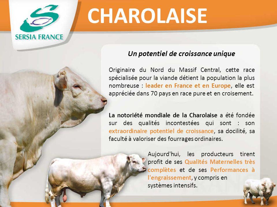 Un potentiel de croissance unique Originaire du Nord du Massif Central, cette race spécialisée pour la viande détient la population la plus nombreuse