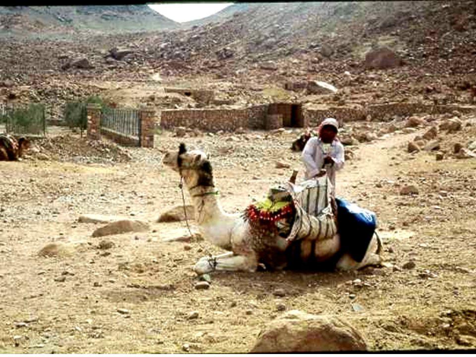 Les pyramides ont été dépouillées, ont servi de carrière pour les mosquées et maisons du Caire.