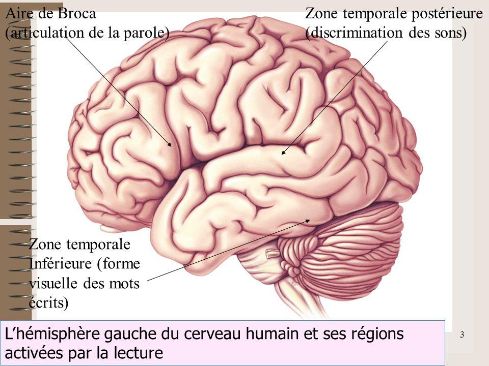 F.Lahalle INS-HEA 60 av. des Landes 92150 Suresnes 3 Lhémisphère gauche du cerveau humain et ses régions activées par la lecture Aire de Broca (articu