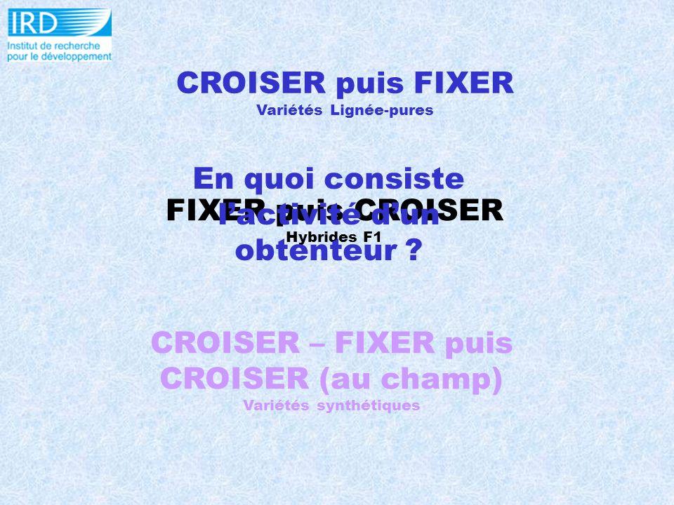 CROISER puis FIXER Variétés Lignée-pures FIXER puis CROISER Hybrides F1 CROISER – FIXER puis CROISER (au champ) Variétés synthétiques En quoi consiste lactivité dun obtenteur