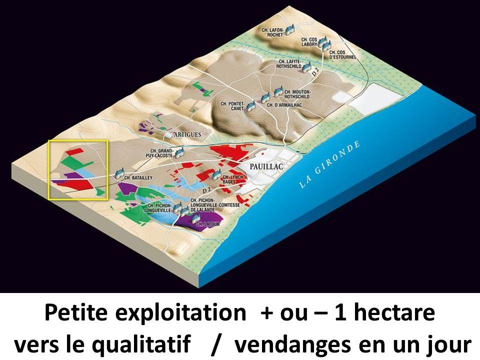 Petite exploitation + ou – 1 hectare vers le qualitatif / vendanges en un jour