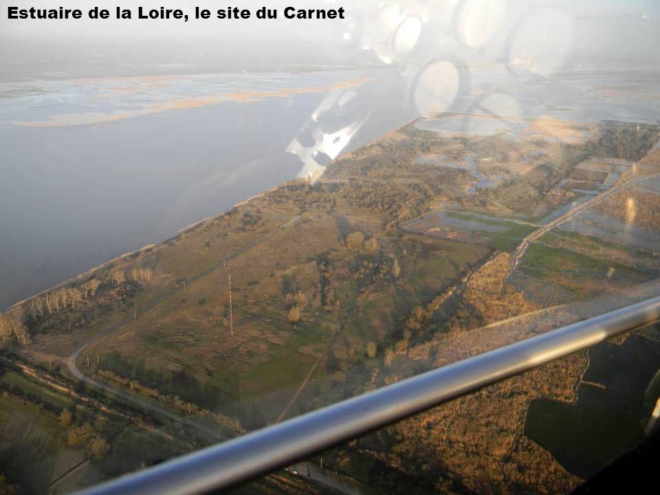 Estuaire de la Loire, le site du Carnet