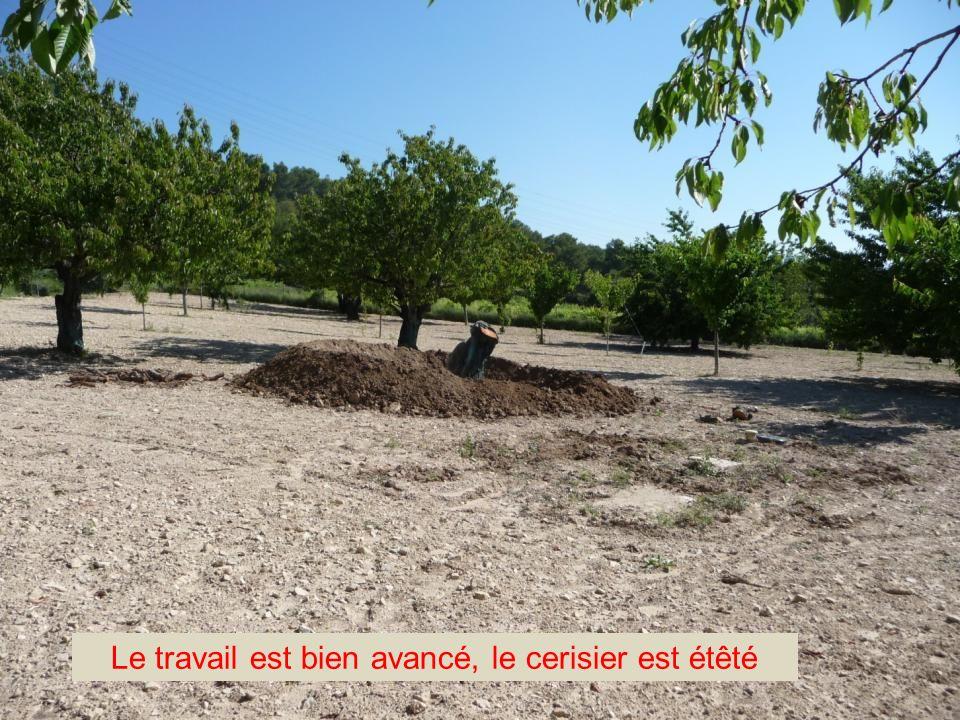 Un moment de vie au cabanon Jean-Marie déracine un vieux cerisier CLIC