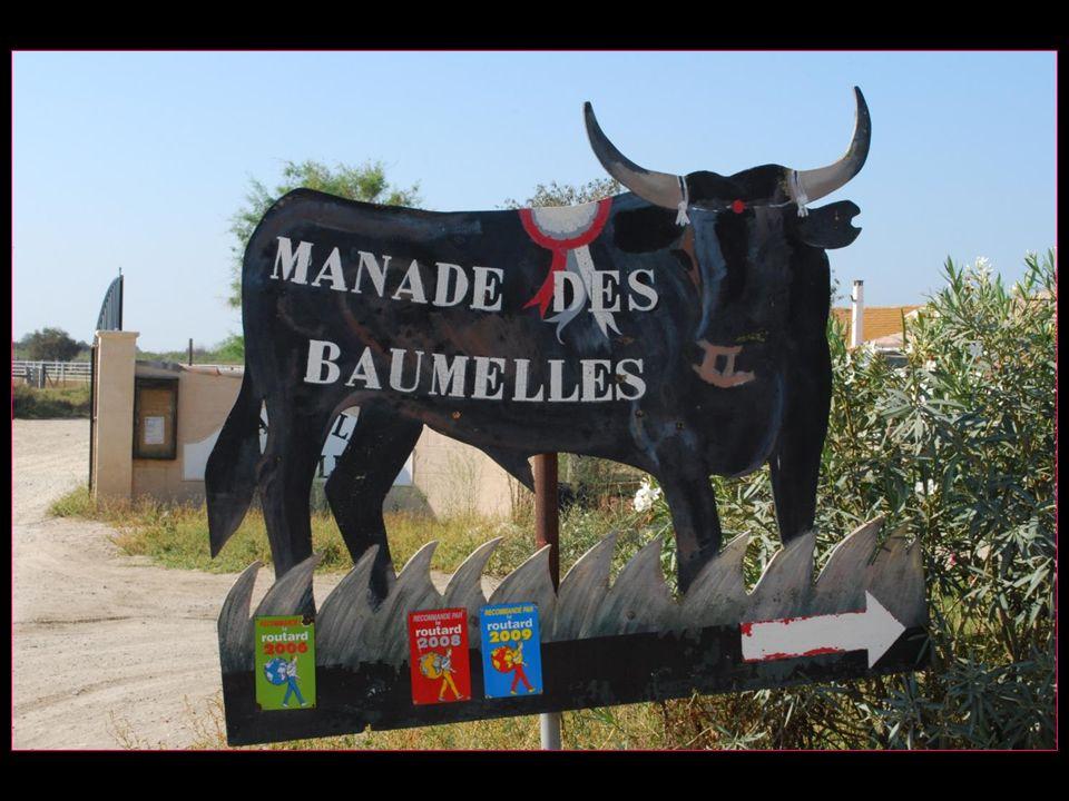 Les voyages BUCHARD La CAMARGUE Automne 2009 Manade des Baumelles Nouvelle version de 2013 défilement automatique