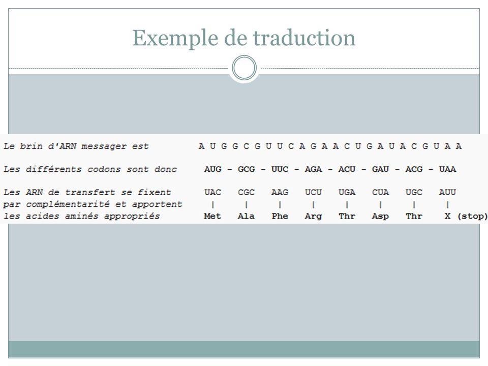 Exemple de traduction