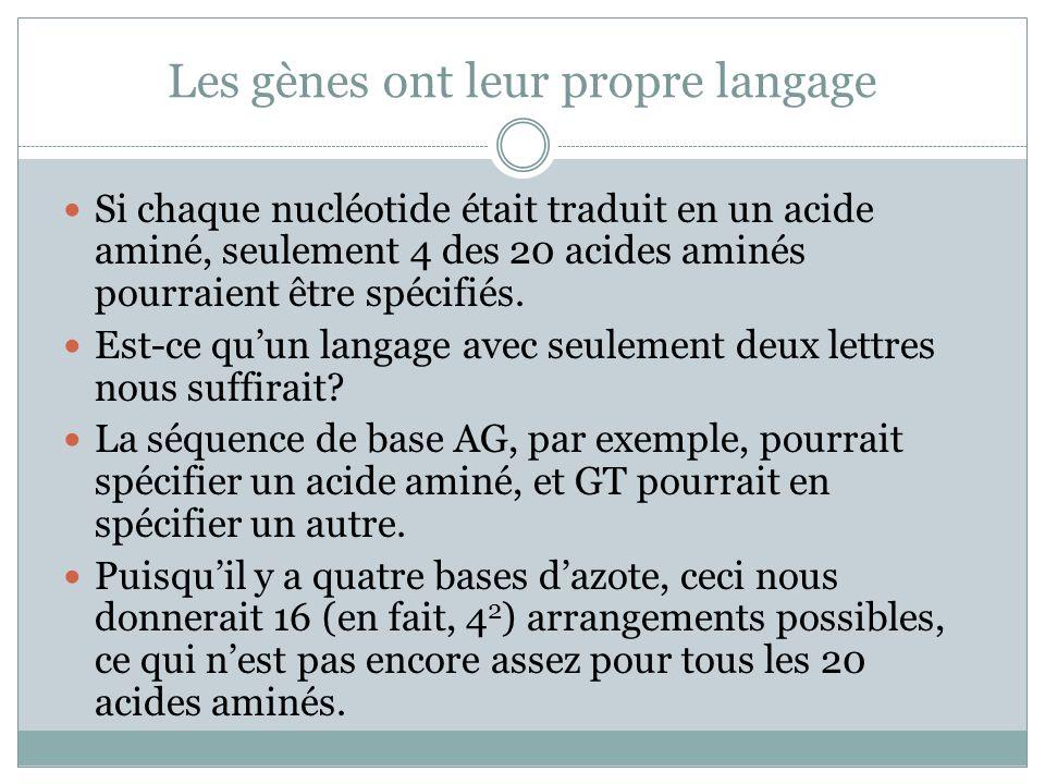 Les gènes ont leur propre langage Si chaque nucléotide était traduit en un acide aminé, seulement 4 des 20 acides aminés pourraient être spécifiés.