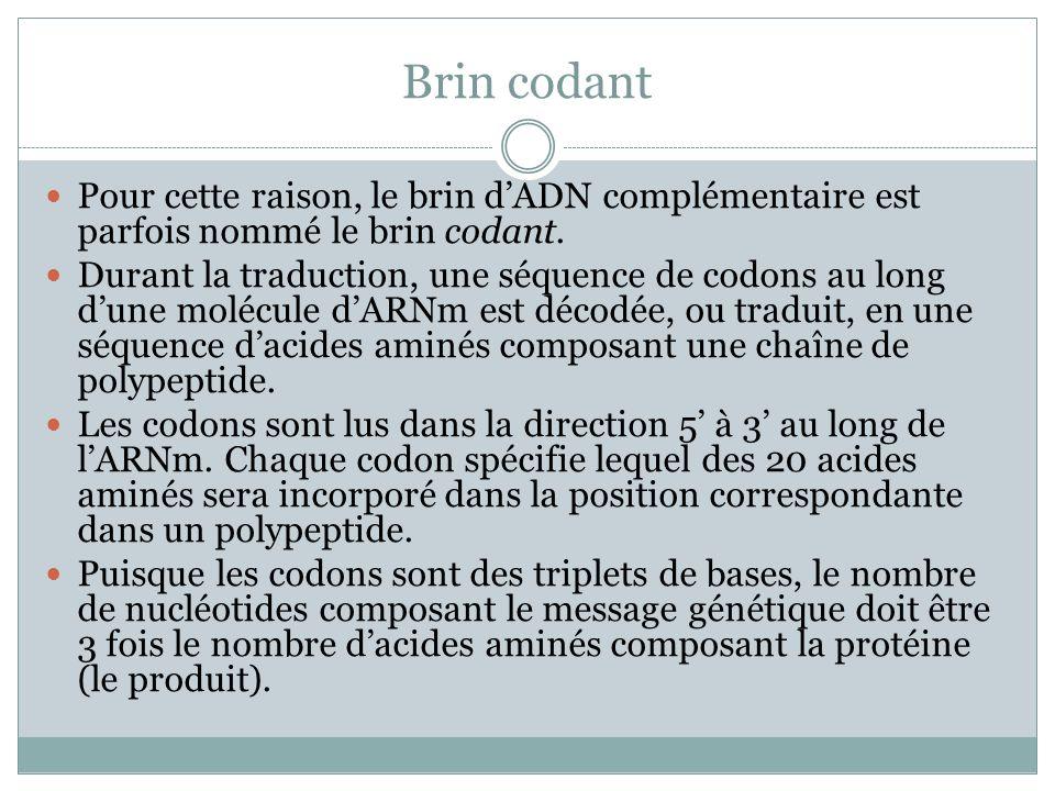 Brin codant Pour cette raison, le brin dADN complémentaire est parfois nommé le brin codant.