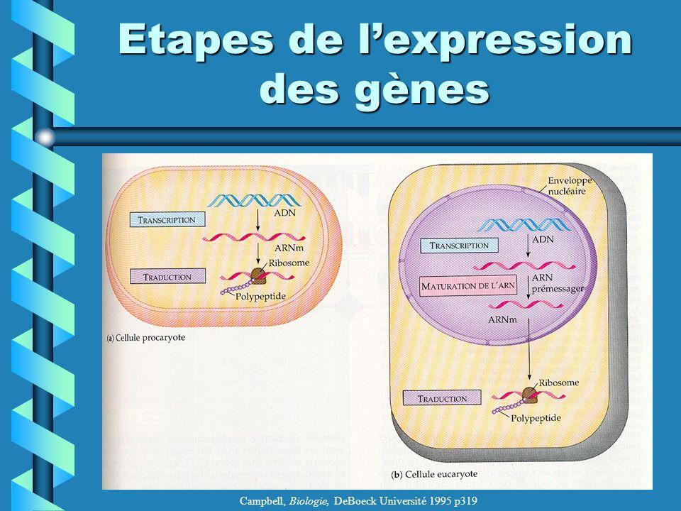 Etapes de lexpression des gènes Campbell, Biologie, DeBoeck Université 1995 p319