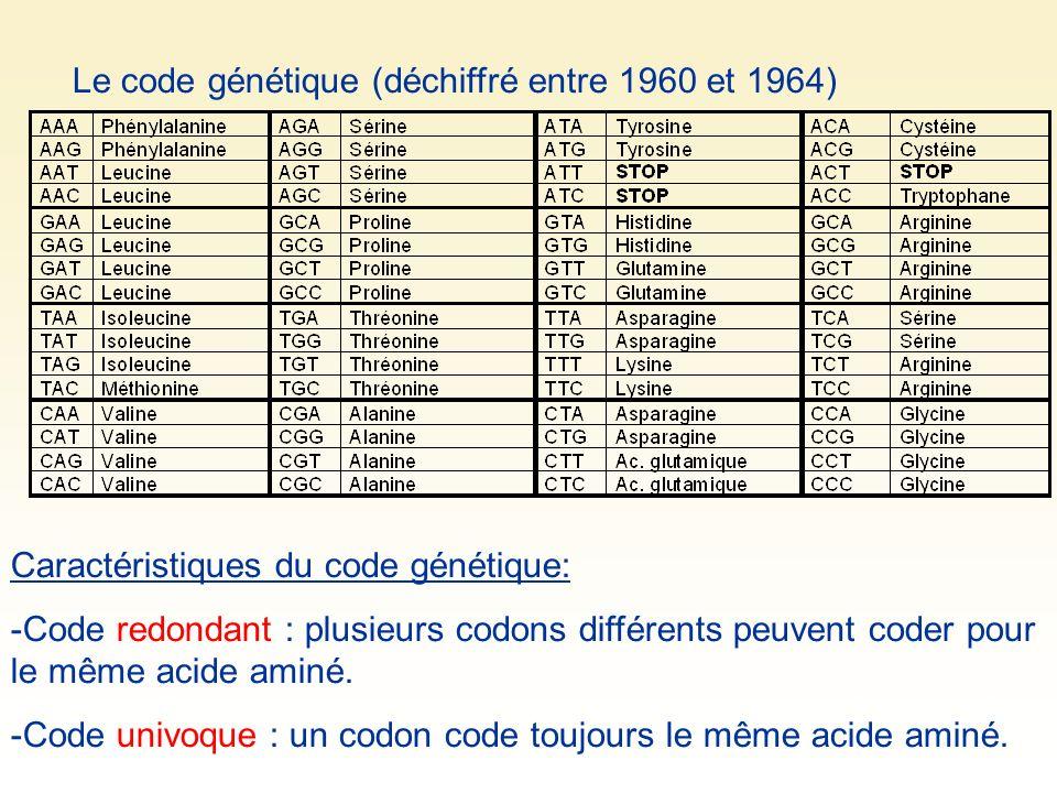 Le code génétique (déchiffré entre 1960 et 1964) Caractéristiques du code génétique: -Code redondant : plusieurs codons différents peuvent coder pour