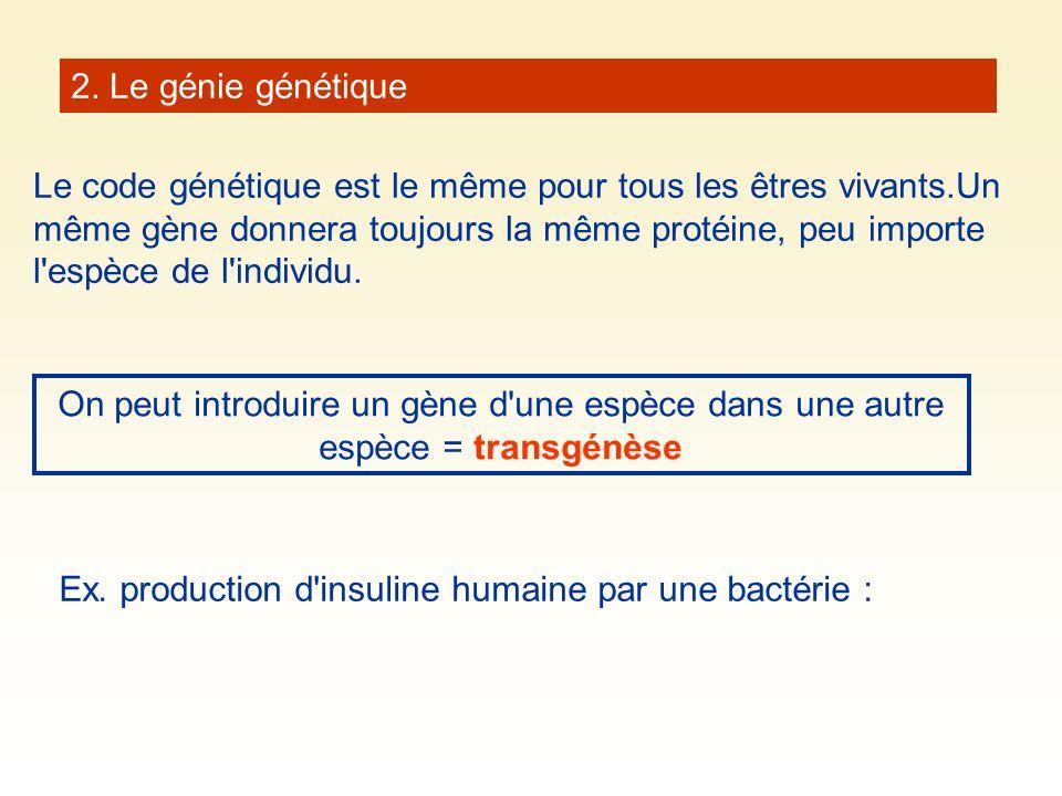 2. Le génie génétique Le code génétique est le même pour tous les êtres vivants.Un même gène donnera toujours la même protéine, peu importe l'espèce d