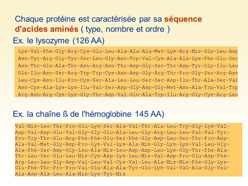 Chaque protéine est caractérisée par sa séquence d'acides aminés ( type, nombre et ordre ) Ex. la chaîne ß de l'hémoglobine 145 AA) Ex. le lysozyme (1