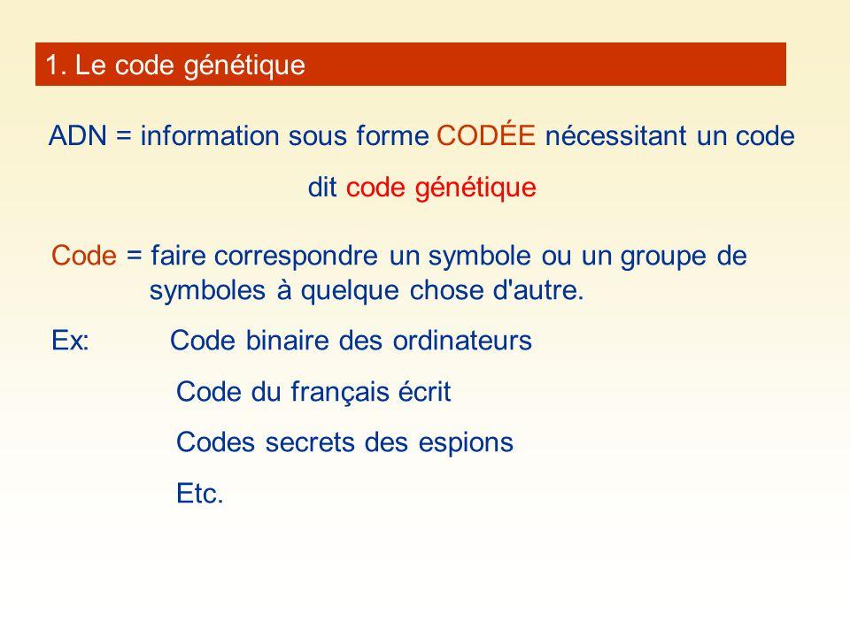 1. Le code génétique ADN = information sous forme CODÉE nécessitant un code dit code génétique Code = faire correspondre un symbole ou un groupe de sy
