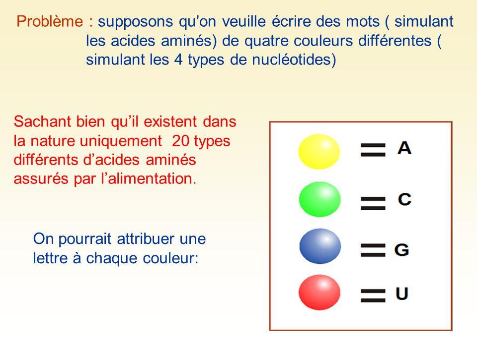 Problème : supposons qu'on veuille écrire des mots ( simulant les acides aminés) de quatre couleurs différentes ( simulant les 4 types de nucléotides)