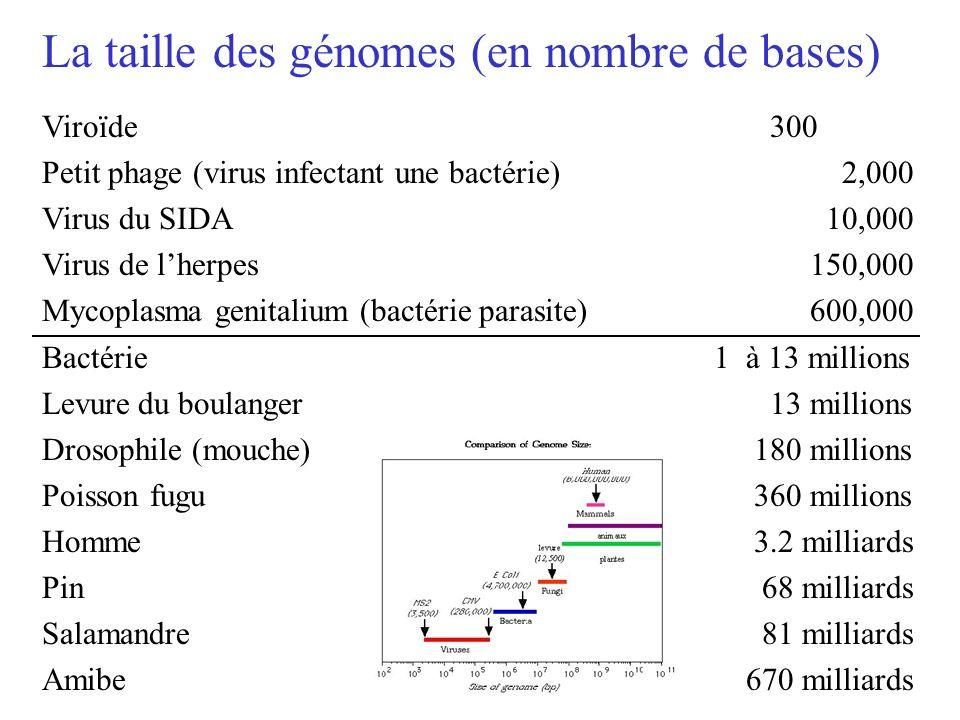 Viroïde 300 Petit phage (virus infectant une bactérie) 2,000 Virus du SIDA 10,000 Virus de lherpes150,000 Mycoplasma genitalium (bactérie parasite)600