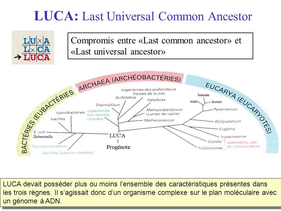 LUCA: Last Universal Common Ancestor LUCA devait posséder plus ou moins lensemble des caractéristiques présentes dans les trois règnes. Il sagissait d