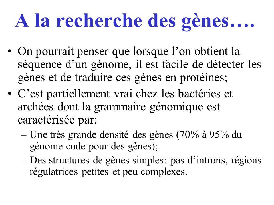 A la recherche des gènes…. On pourrait penser que lorsque lon obtient la séquence dun génome, il est facile de détecter les gènes et de traduire ces g