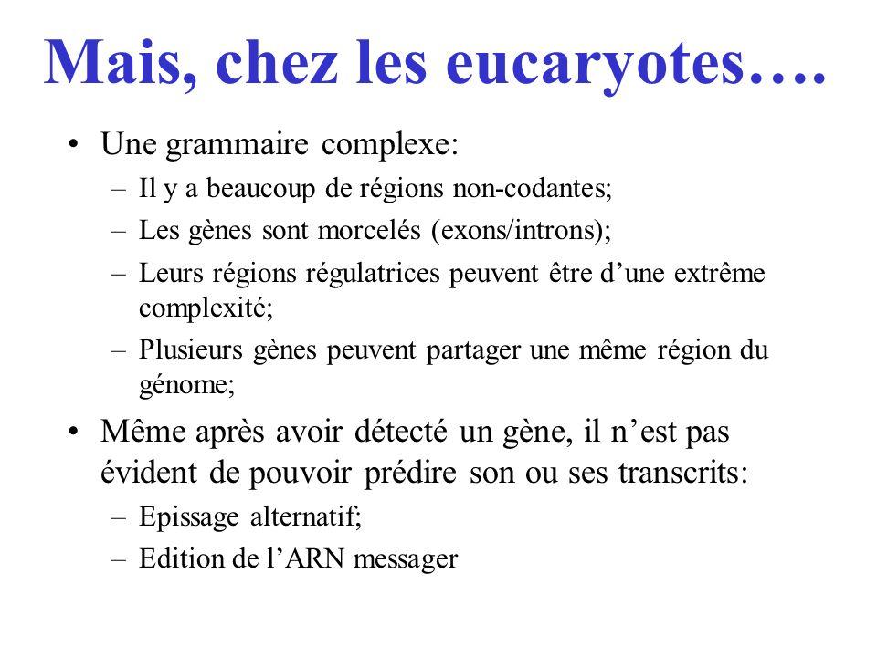 Mais, chez les eucaryotes…. Une grammaire complexe: –Il y a beaucoup de régions non-codantes; –Les gènes sont morcelés (exons/introns); –Leurs régions