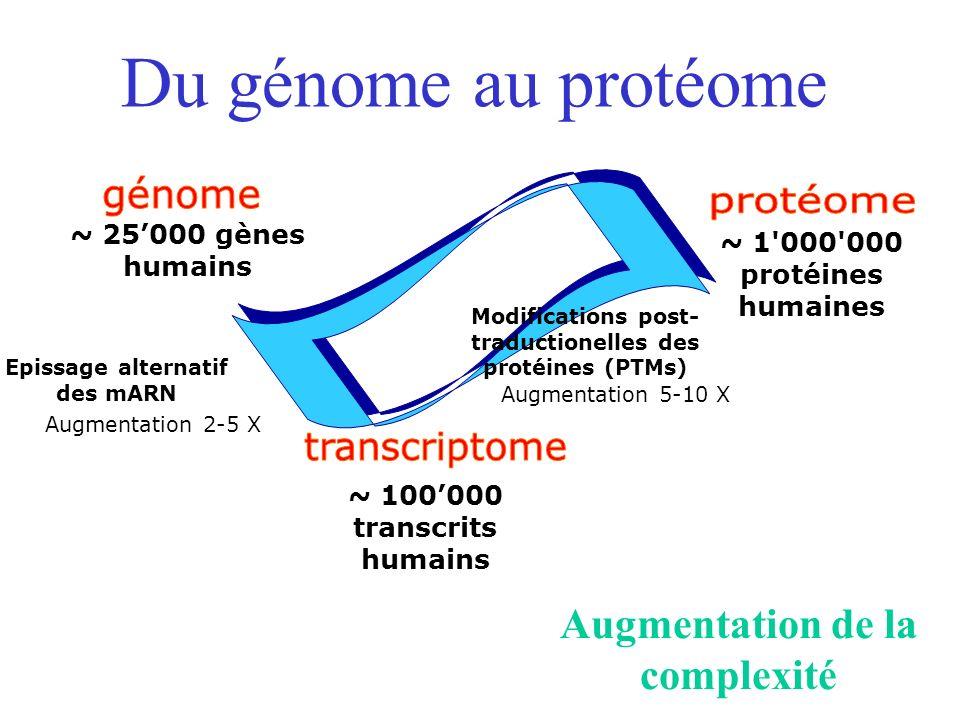 Du génome au protéome Modifications post- traductionelles des protéines (PTMs) Augmentation 5-10 X Epissage alternatif des mARN Augmentation 2-5 X ~ 1