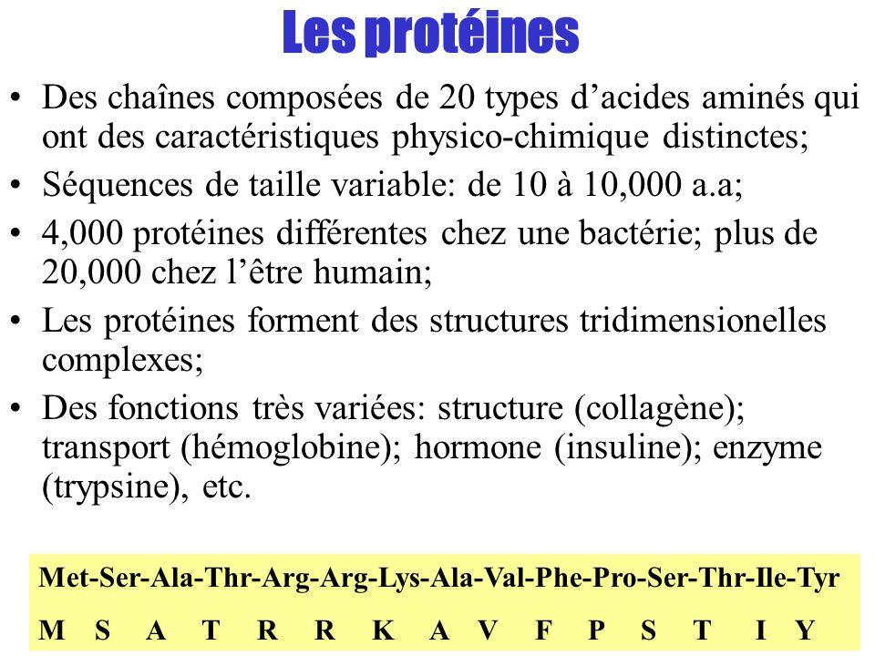 Les protéines Des chaînes composées de 20 types dacides aminés qui ont des caractéristiques physico-chimique distinctes; Séquences de taille variable:
