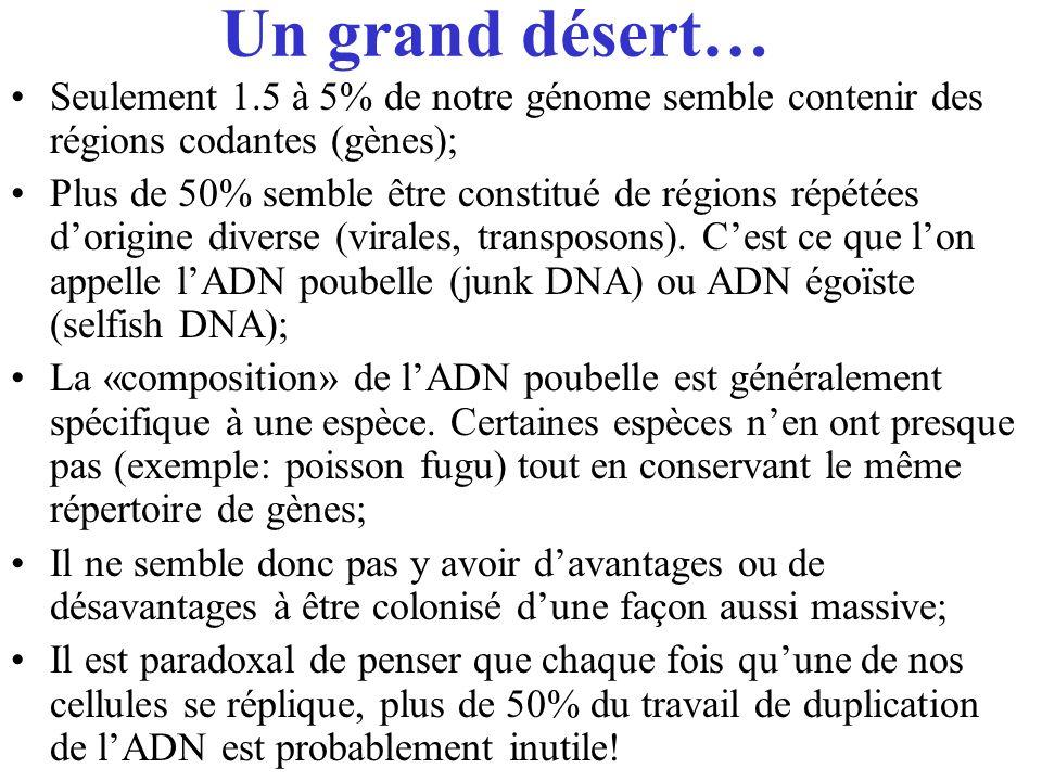 Un grand désert… Seulement 1.5 à 5% de notre génome semble contenir des régions codantes (gènes); Plus de 50% semble être constitué de régions répétée
